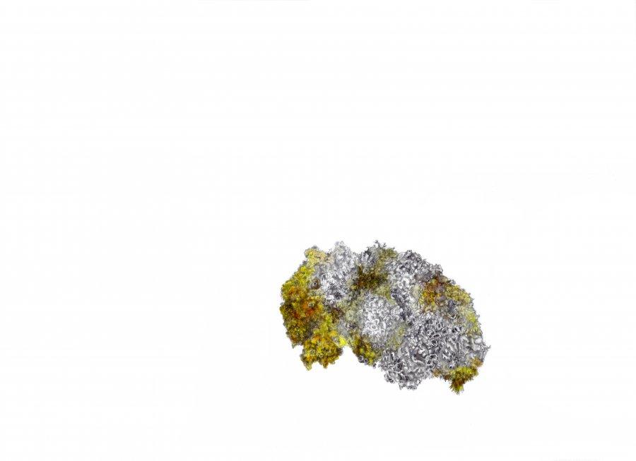 Dessins, Lichens