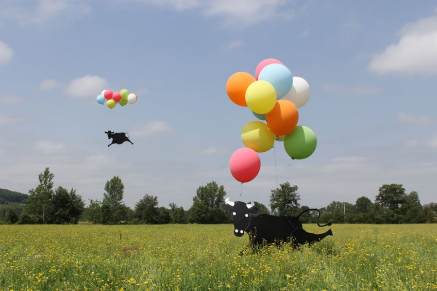 Flying Black Cow Club