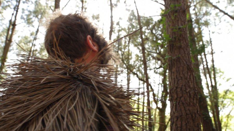 Homo-Pinus Acus