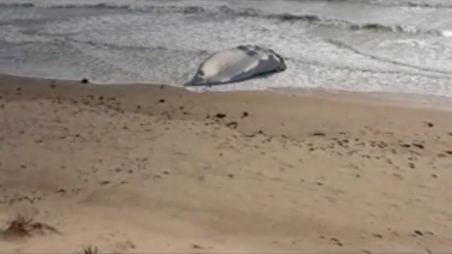 Échouée sur le rivage