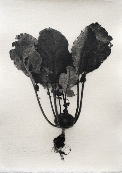 fungi • root vegetables • blossoms gelatin silver prints on watercolor paper